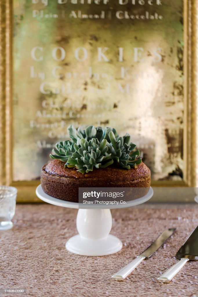 Wedding Day Details Dessert Succulent Wedding Cake Topper On A Simple One Tier Cake On White Stand With Gold Background High Res Stock Photo Getty Images