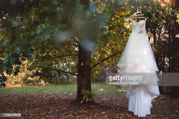wedding dress on tree - andrea rizzi stock pictures, royalty-free photos & images