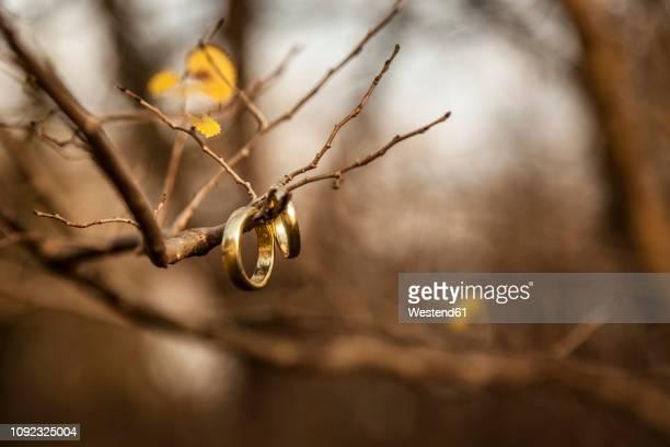 wedding rings hanging on bare twigs - married stock-fotos und bilder