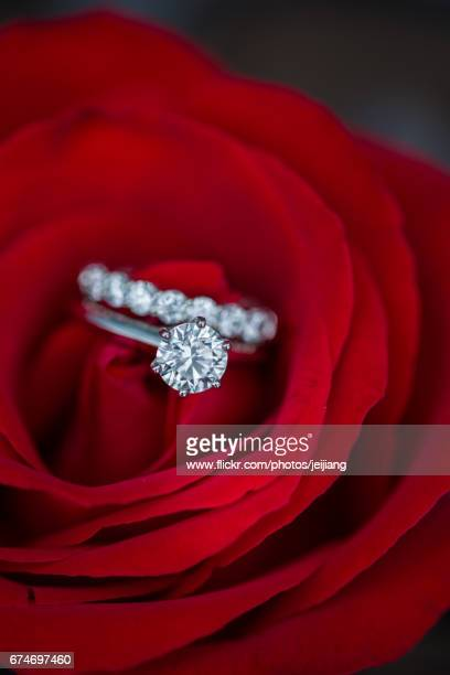 Wedding rings on a red rose