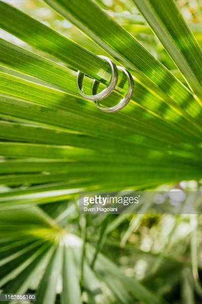wedding rings on green fern leaf - puerto del carmen stock pictures, royalty-free photos & images