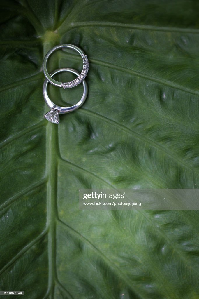 Wedding rings on green leaf : Stock Photo