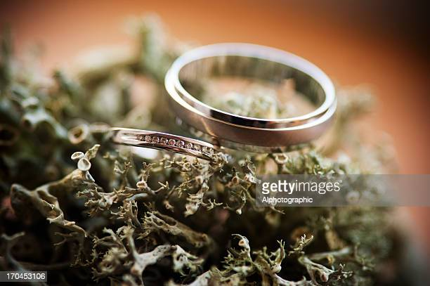 wedding rings on lichen - white gold stock pictures, royalty-free photos & images