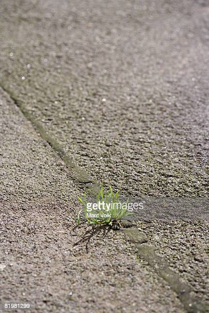 A weed growing in a crack in pavement