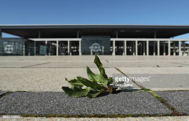 A weed grows in front of the main terminal at the stillnotfinished BER Willy Brandt Berlin Brandenburg International Airport on April 6 2017 in...