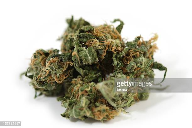 weed - bud stock pictures, royalty-free photos & images