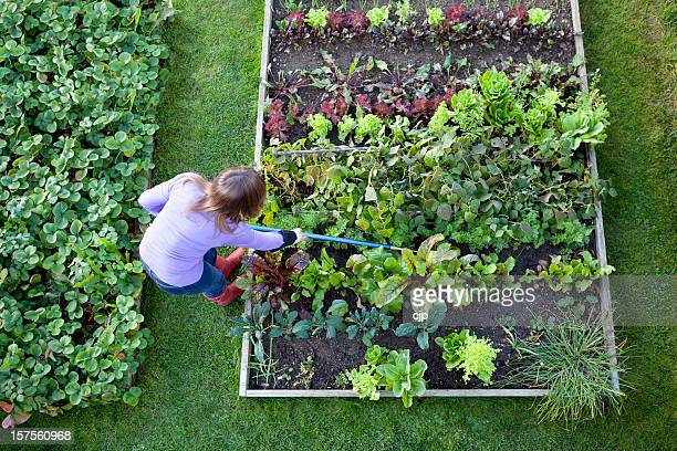 Weeding Veg Patch Gardener from Overhead