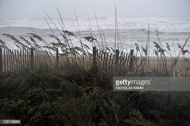 Weeds blow in the wind on the beach in Kill Devil Hills on August 27, 2011 as Hurricane Irene approaches the northern Outer Banks of North Carolina....