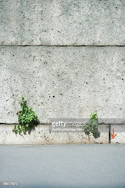 Weeds growing from cracks in wall