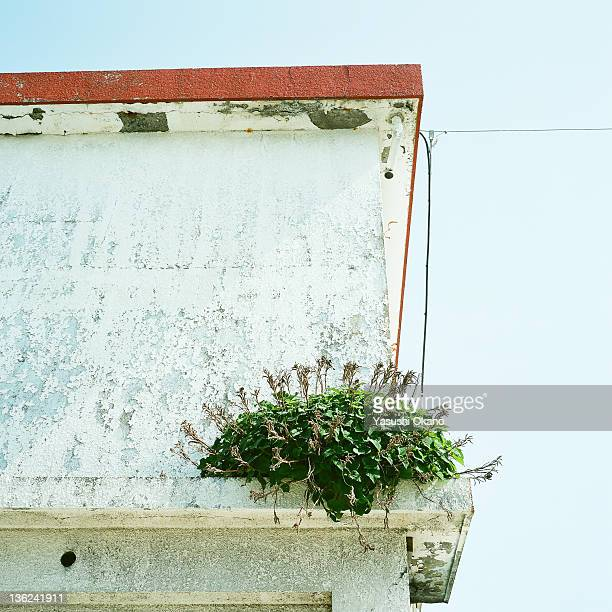 Weeds on wall against sky