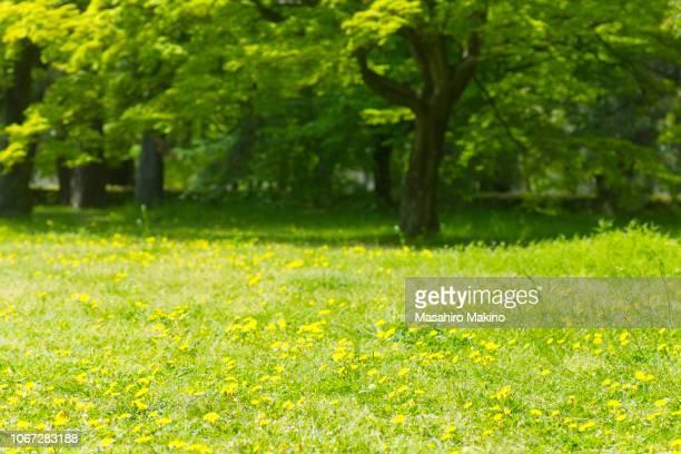 weedy grassland - 草原 ストックフォトと画像