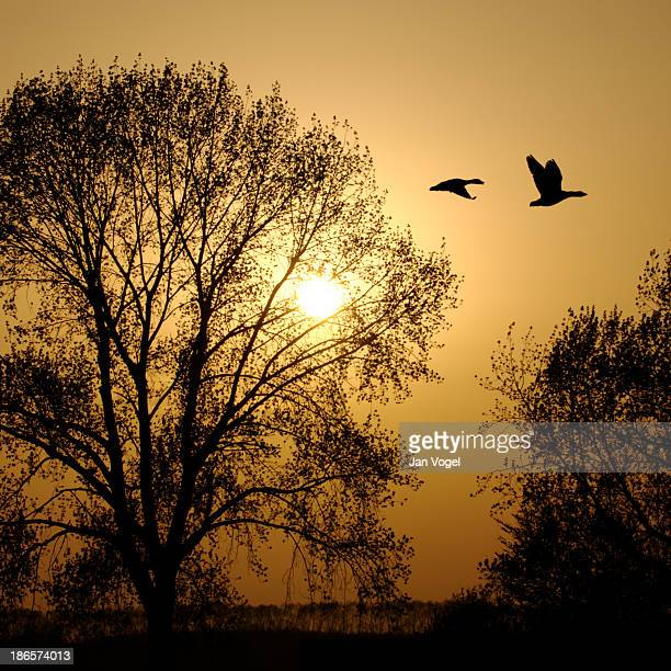 weegje - gouda - vogel stock pictures, royalty-free photos & images