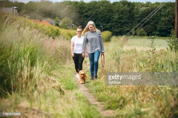 weekend dog walking - walking stock pictures, royalty-free photos & images
