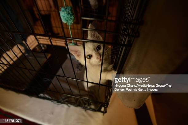 8 weeks old kitten Oliver is in Governor's Mansion on Saturday March 9 2019 First Gentleman Marlon Reis hosted a free pet adoption event in...