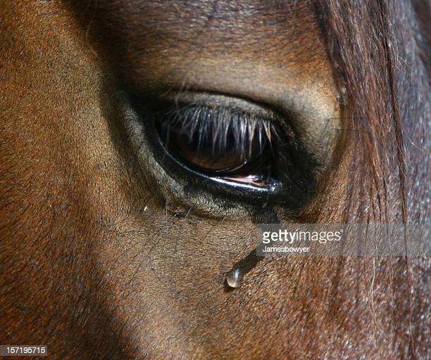 weeping gros yeux - equestrian animal photos et images de collection