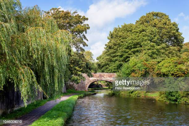 Weeping Willow trees on the Lancaster Canal