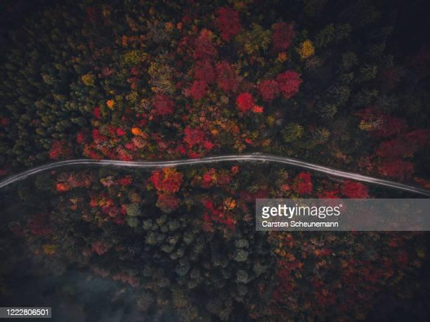 weg durch herbstwald - schwarzwald stock-fotos und bilder