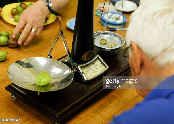 Weighmen grade the entries using a traditional set of Avery Scales to weigh gooseberries during the annual Egton Bridge gooseberry show on August 06...
