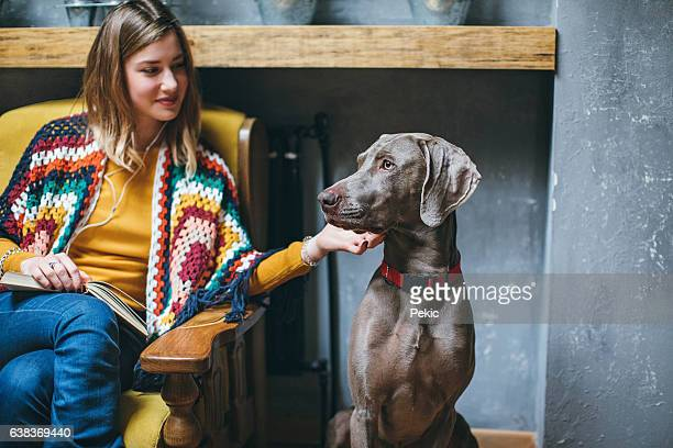 Weimaraner dog and his owner in pet friendly cafe
