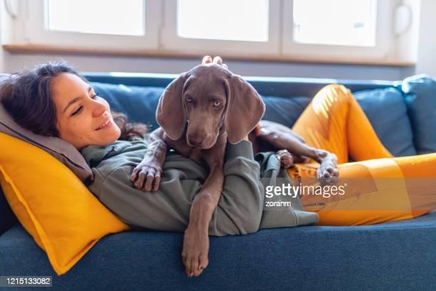 笑顔の若い女性の上に横たわっているワイマラナーの子犬 - 訓練犬 ストックフォトと画像