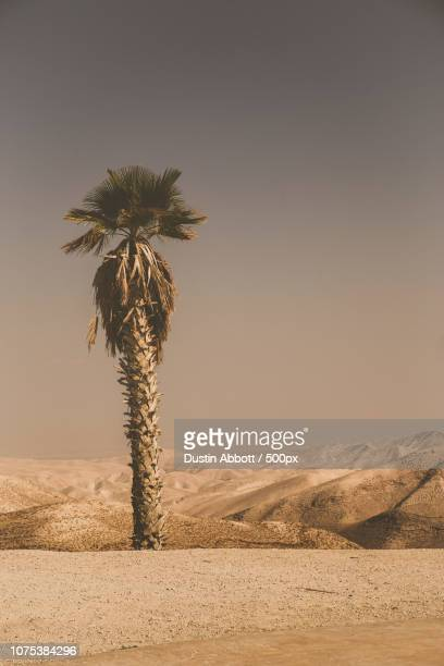 Welcome to the Negev