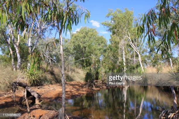 a welcoming billabong in the australian outback - billabong water stock photos and pictures