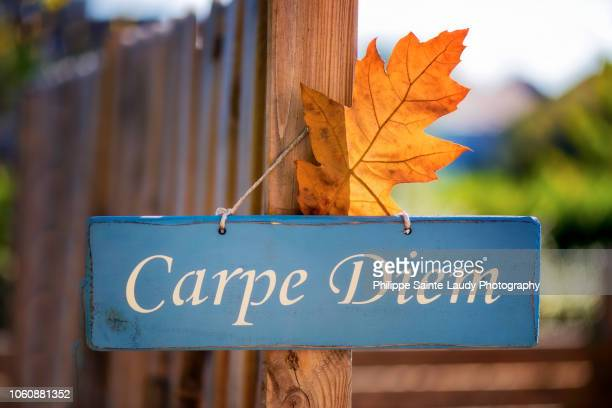 Welcoming Fall In The Carpe Diem