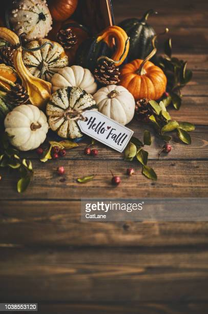 welcoming fall with pumpkin assortment still life and hello fall message - thanksgiving cat stock pictures, royalty-free photos & images