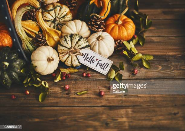 welcoming fall with pumpkin assortment still life and hello fall message - happy thanksgiving card stock pictures, royalty-free photos & images