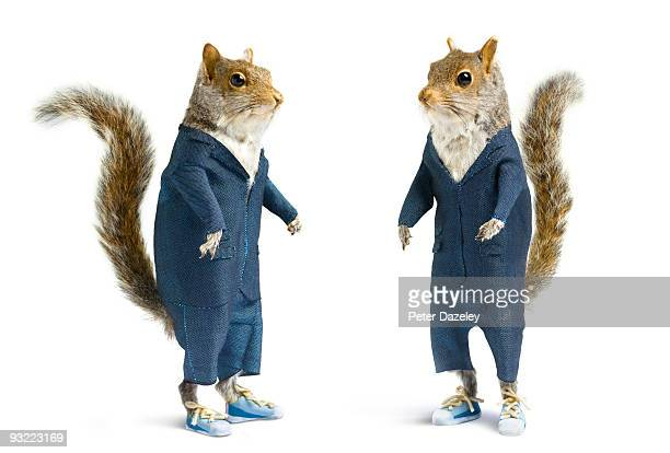 well dressed squirrels in suits on white.  - リス ストックフォトと画像