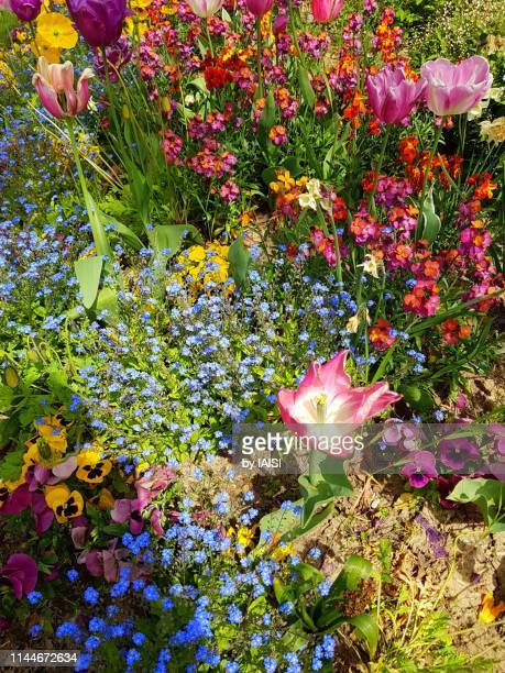 a well kept, variegated floral arrangement in the garden, full frame - impressionism stock pictures, royalty-free photos & images