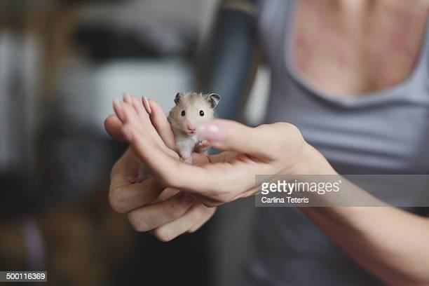 Well manicured hands holding a hamster