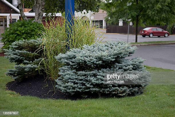 well tended plantings outside a burger king in greenfield, ma - burger king stock pictures, royalty-free photos & images