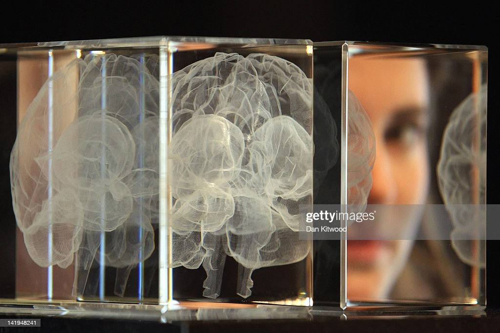 The Wellcome Collections Unveils Their New Exhibition Brains : ニュース写真