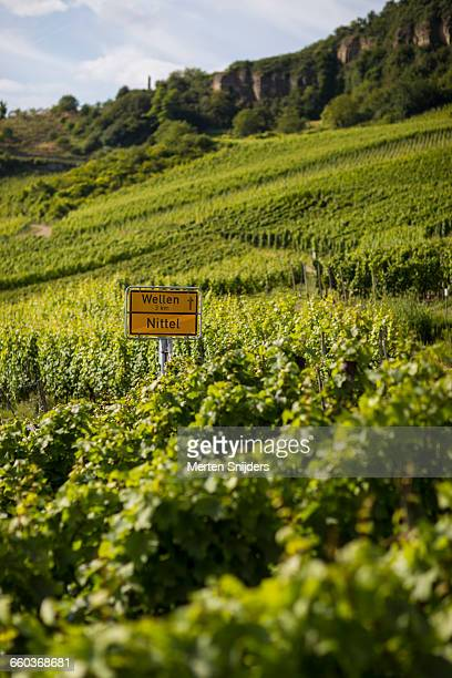 wellen and nittel direction signs amidst winery - moselle imagens e fotografias de stock