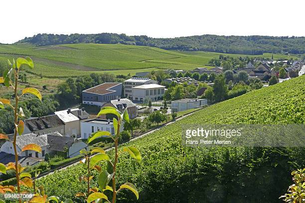 wellenstein and vineyards, moselle, luxembourg - luxemburgo fotografías e imágenes de stock