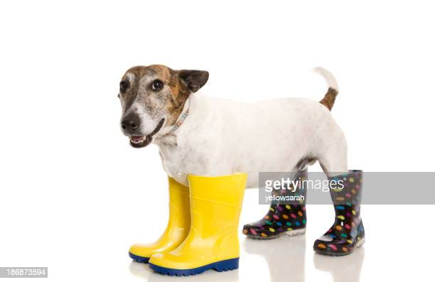 Wellington chaussure chien