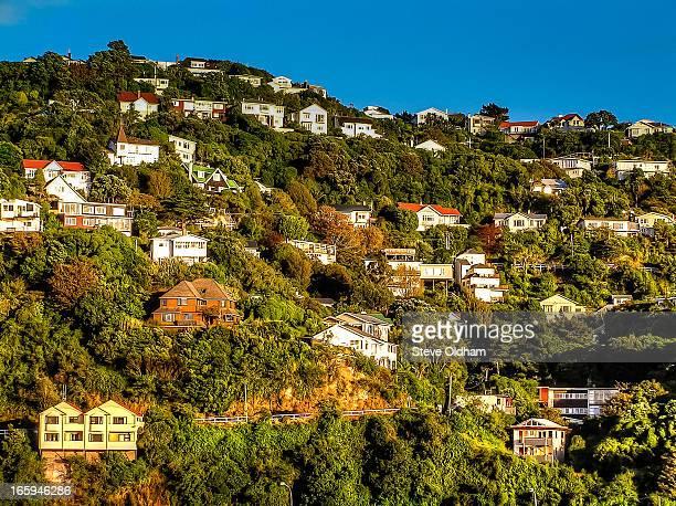 Wellington suburb
