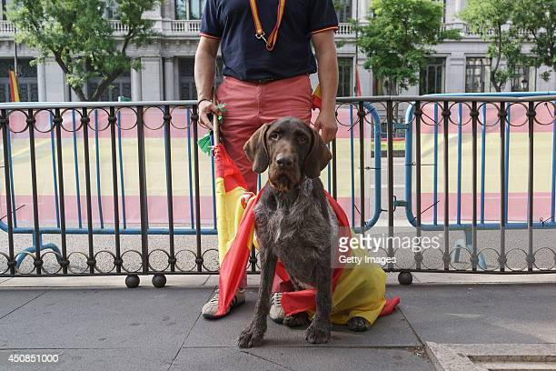 A wellwisher with his dog gather at the streets of Madrid prior to the King's official coronation ceremony of King Felipe VI on June 19 2014 in...