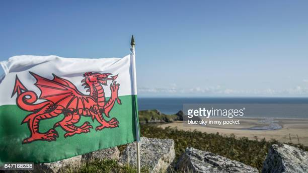 welsh flags. - welsh flag stock pictures, royalty-free photos & images