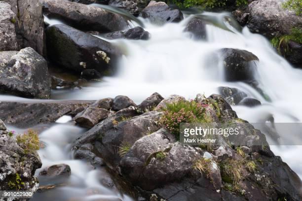welsh heather - heather brooke ストックフォトと画像
