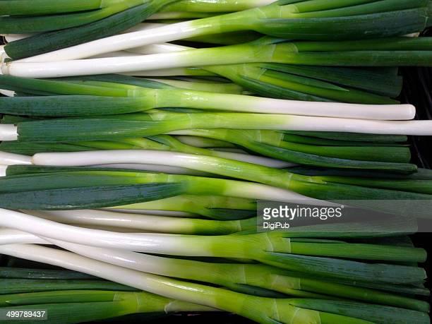 Welsh Onion