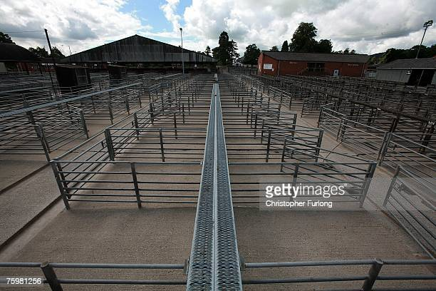 Welshpool Livestock Auction pens are empty in the wake of the Foot and Mouth disease outbreak in Surrey, August 6, 2007 in Welshpool, England....