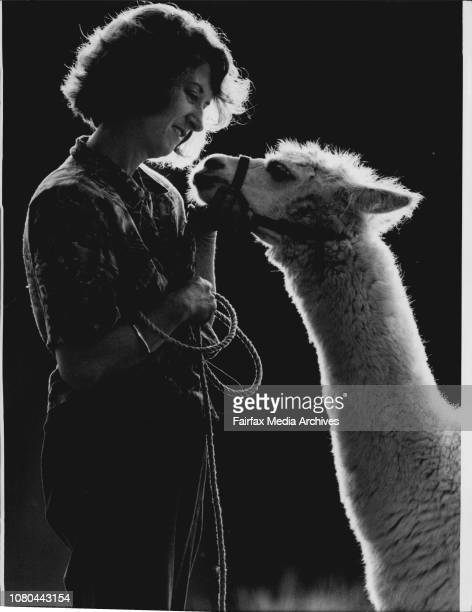 Wendy Billington with 2½ yearold male alpaca Peppi they're wellbred well mannered and well amorousThey are cuddly amorous intelligent and hardy They...
