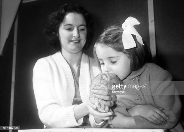 Wendy Harrison seen here with one of the baby Chinchilla's her mother Mary breeds, 3rd January 1959.