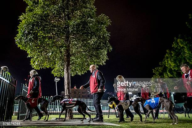 Wentworth Park race stewards on July 16 2016 in Sydney Australia Greyhound Racing in NSW has now resumed after a week suspension NSW Premier Mike...