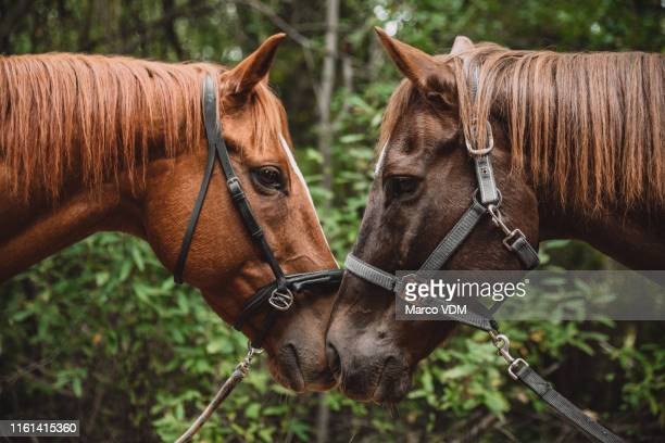we're all looking for our mate in this life - herbivorous stock pictures, royalty-free photos & images