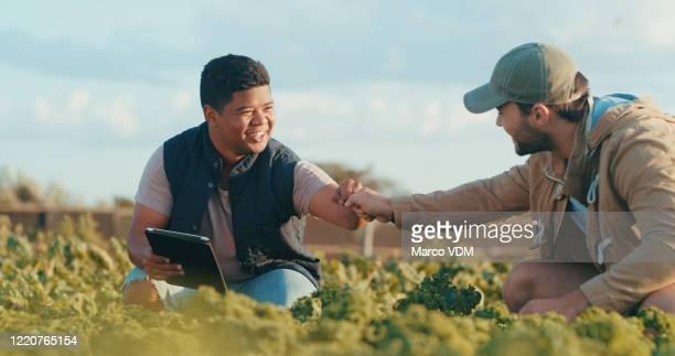estamos fazendo esse homem. - agricultura - fotografias e filmes do acervo