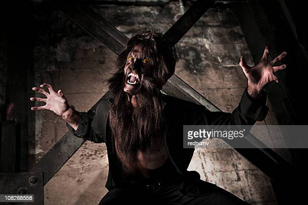 werewolf attack - hairy man stock pictures, royalty-free photos & images
