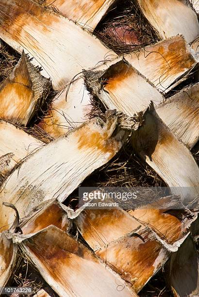 A detail of the layered fibrous bark of the Mexican Fan Palm.